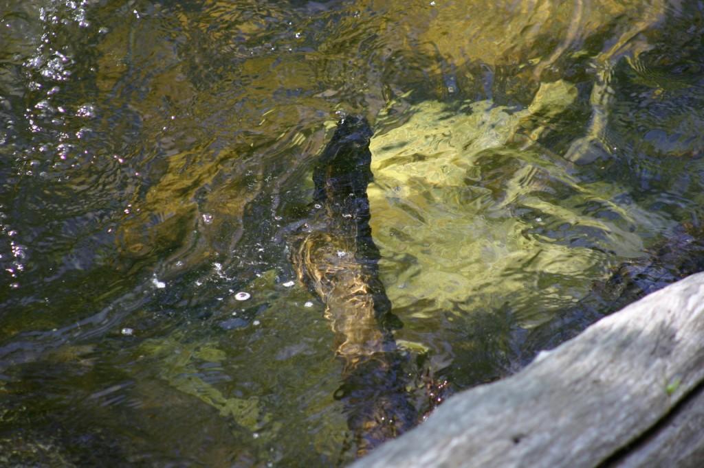 Log under water